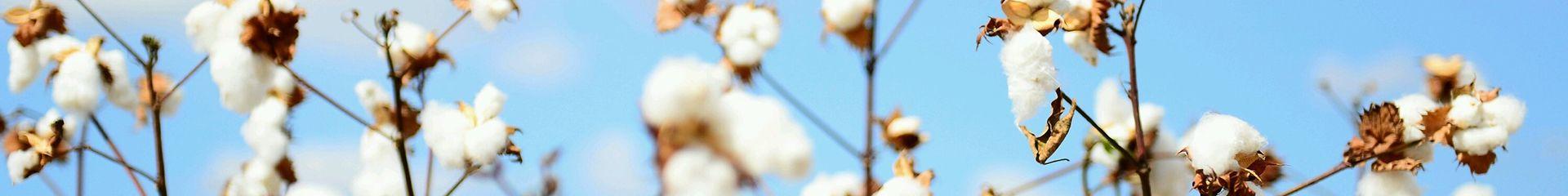 Voile Baumwolle